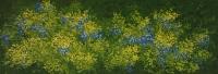 Mustikkapensas (Blueberry bush) 45x105
