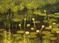 Lumpeita (Water lilies) 100x122