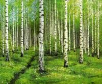 Koivikko - osa (Birch forest, partial) 255x450