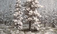 Räntäistä lunta (Sleet snow) 65x105