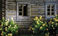 Ruusupensaita (Rose bushes) 120x190